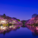 Sakura Viewing 2017: Don't Miss Those 6 Best Hanami Spots in Tokyo