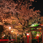 Ohanami A to Z: How to Enjoy Cherry Blossoms during Day and Night