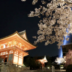 Sakura Illumination in Kyoto: 5 Best Spots to View Cherry Blossoms at Night